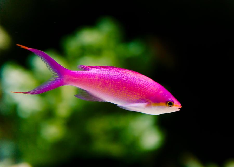 Kim Sallaway Photography   fish