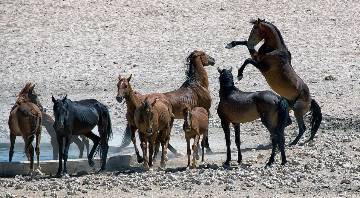 Wild horses by luethy