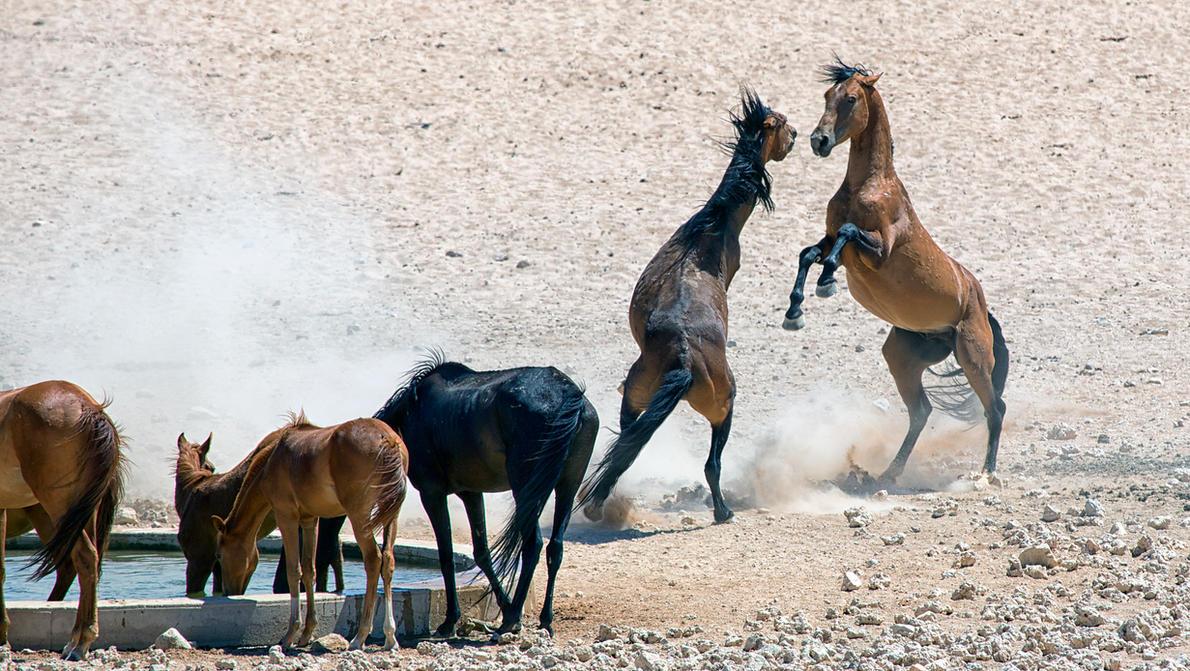 Wild Horses II by luethy