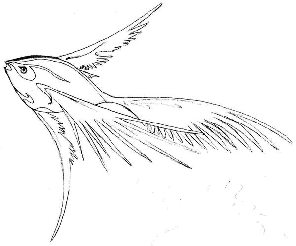 Flying fish by shaded dream on deviantart for Flying fish drawing