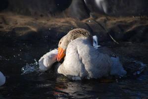 happy goose by jelenasseid