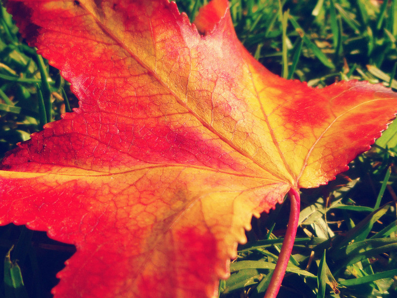 A Leaf #2 by Hiromi415
