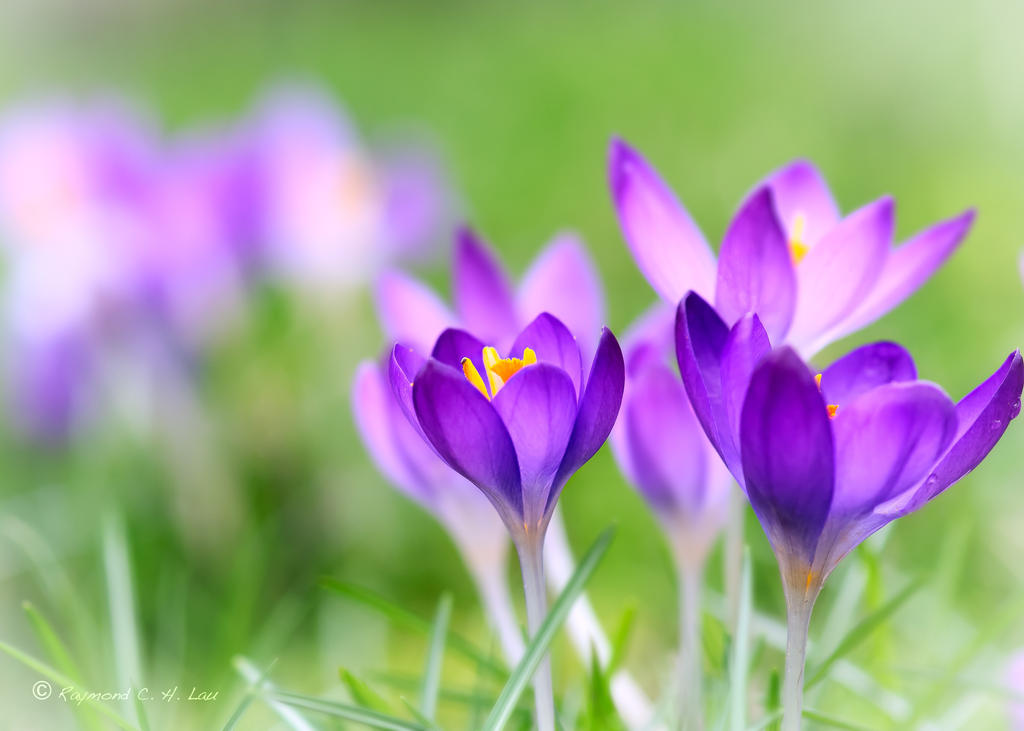 Spring flower by raylau on deviantart spring flower by raylau mightylinksfo Images