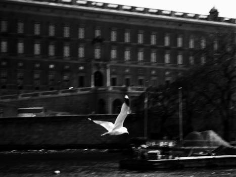 Fly, Fly away