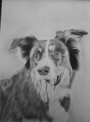 Border collie by Delvardian