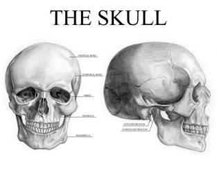 The Skull by Gundamjack