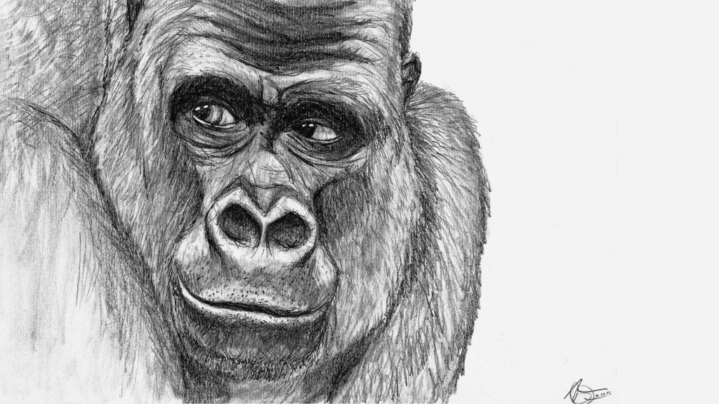 Monkey Study 4 by Odikay