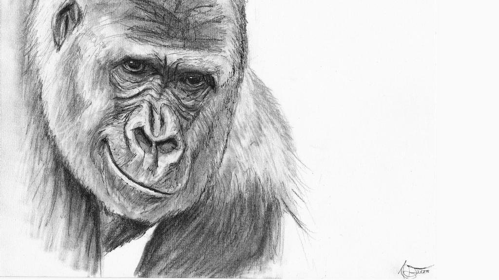 Monkey Study 5 by Odikay