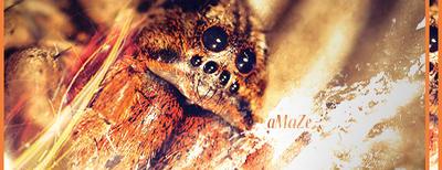 Spider Sign by Topgun-GFX