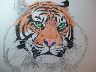 Tiger by cibroh
