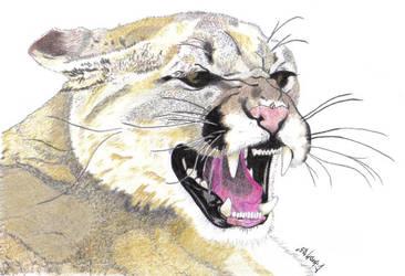 Cougar tatt by cibroh