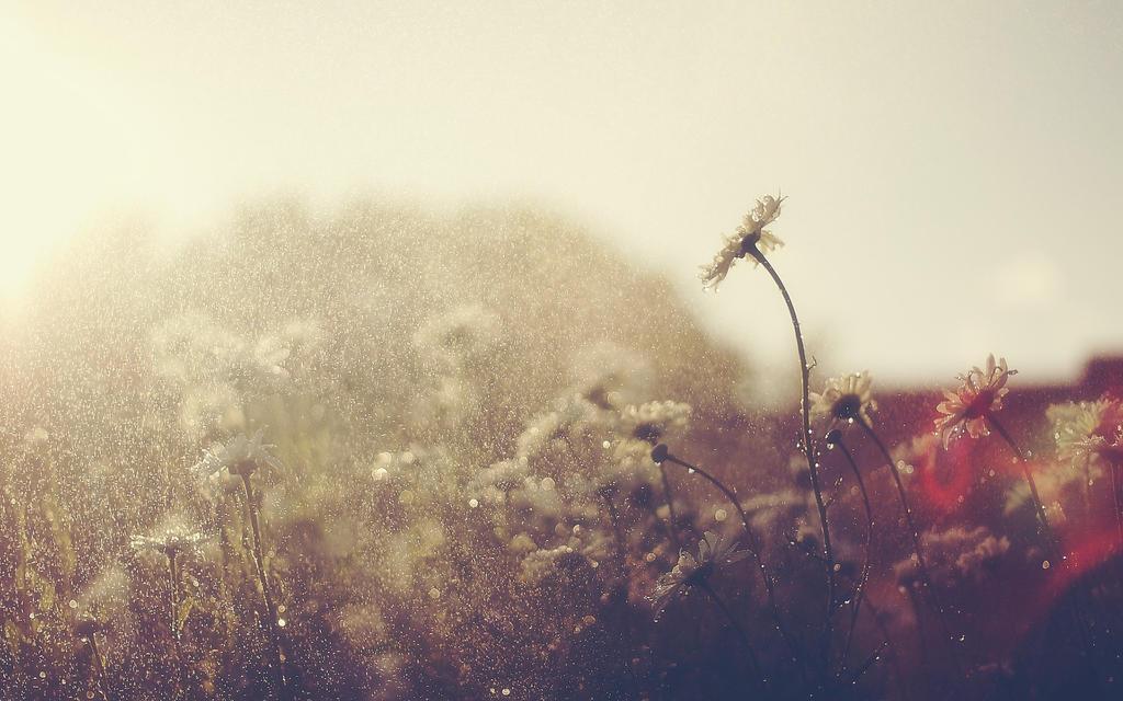 rain showers background summer - photo #7