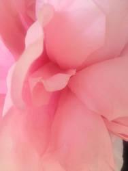Flower 21 by TsuyuekiDiAnshare