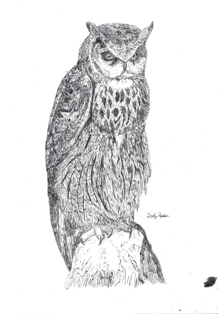how to draw a simple eagle owl