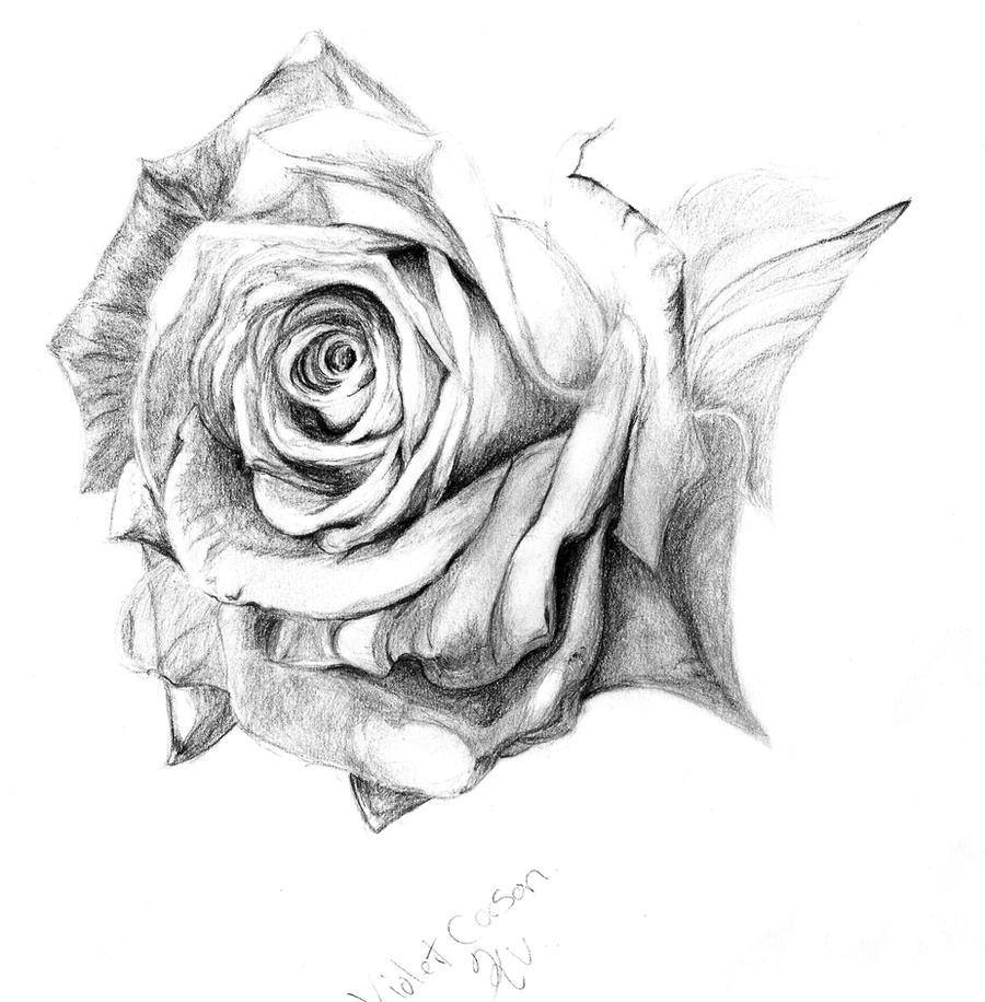 Pencil rose wip by LadyKylin on DeviantArt
