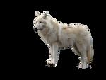 Tundra wolf.png