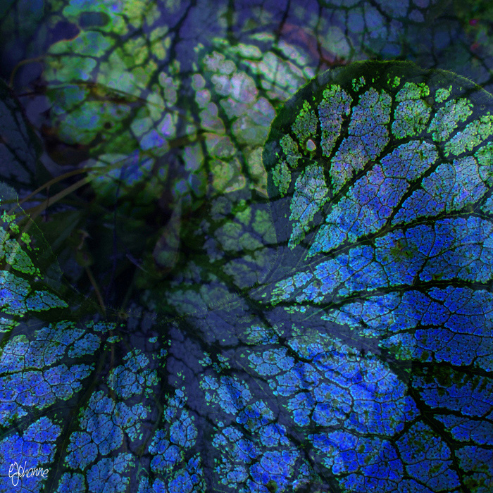 Blue Leaves by ejohanne