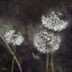 The Ballerinas by ejohanne