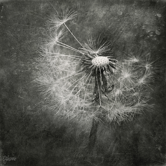Fragile by ejohanne