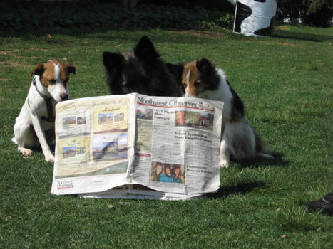 'dogs can read'