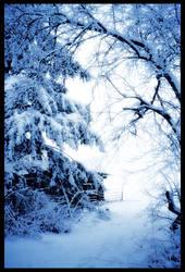 Blue Winter by sej