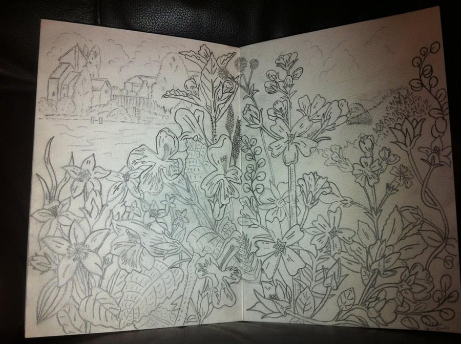 Traditional Flower Line Drawing : Flower drawing 3 by butterflylion86 on deviantart