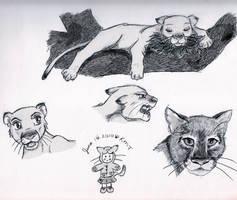 Cougar Sketch Dump