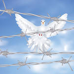 Dove and Barbed Wire by AnnArtshock