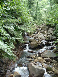 a river in the caribean jungle