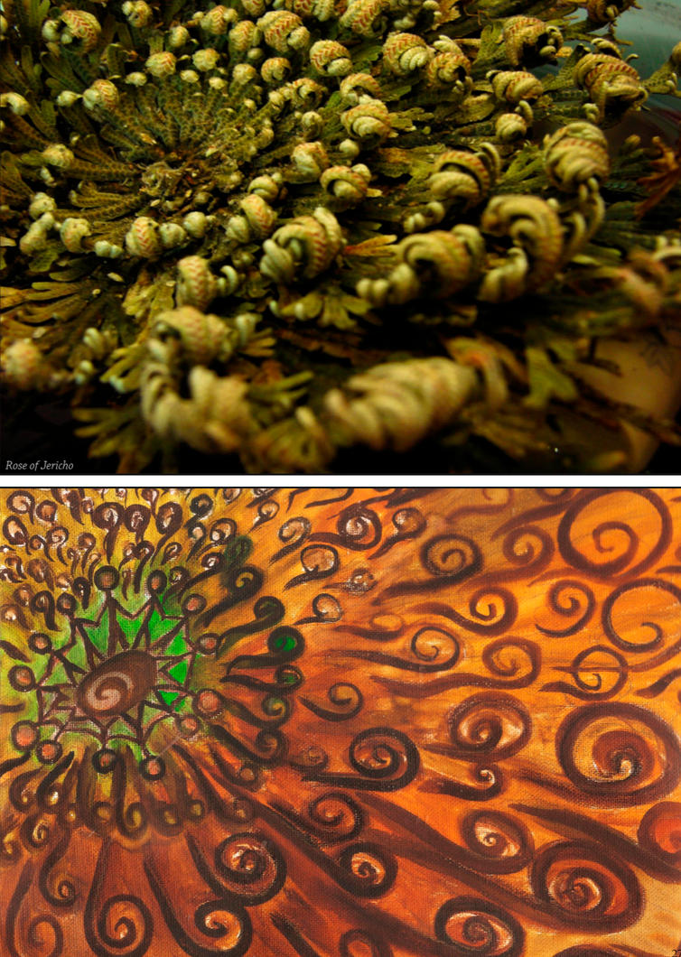 13 abstractography rose of jericho by ayaneria on deviantart. Black Bedroom Furniture Sets. Home Design Ideas