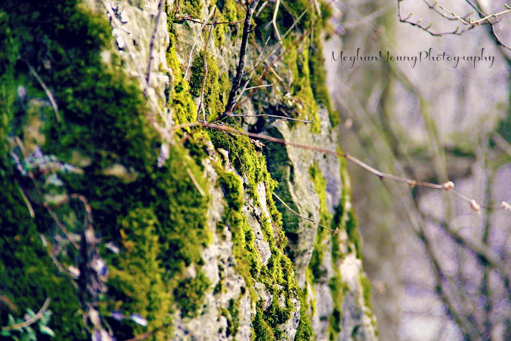 Moss by Askingtoattackmeghan