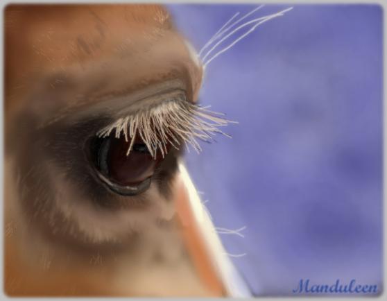 http://fc09.deviantart.net/fs70/f/2012/228/b/6/oeil_de_biche_by_manduleen-d5ba5ap.png