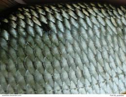 Fish 09_quaddles by quaddles