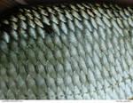 Fish 09_quaddles