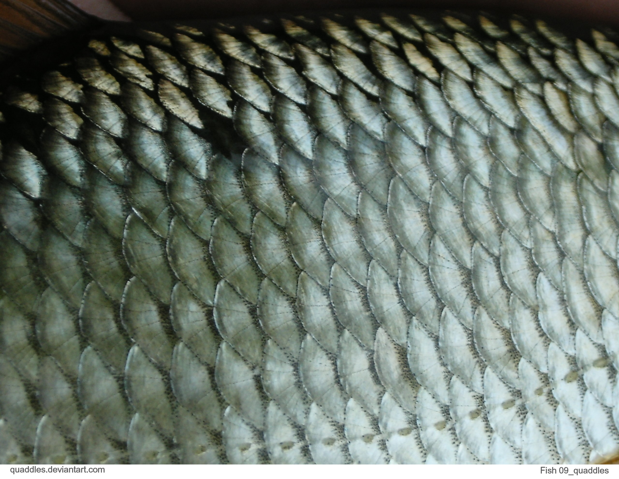 1000 images about hippocampus on pinterest for Do all fish have scales