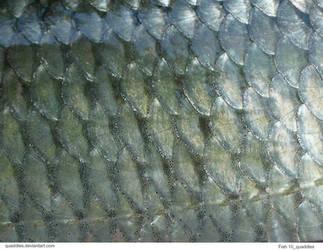 Fish 10_quaddles by quaddles
