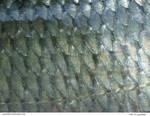 Fish 10_quaddles