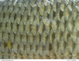 Fish 11_quaddles by quaddles