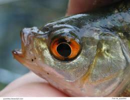 Fish 06_quaddles by quaddles