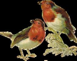 VICTORIAN birds 1_quaddles by quaddles