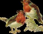 VICTORIAN birds 1_quaddles