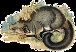 VICTORIAN animal 5_quaddles