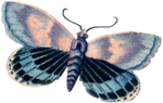 VICTORIAN butterfly 1_quaddles