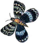 VICTORIAN butterfly 2_quaddles