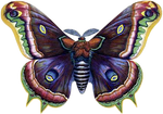 VICTORIAN butterfly 3_quaddles