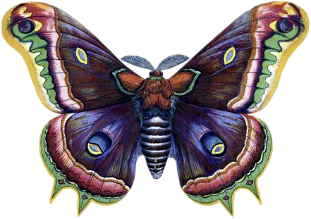 VICTORIAN butterfly 3_quaddles by quaddles