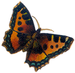 VICTORIAN butterfly 4_quaddles