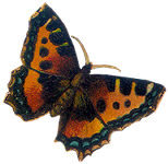 VICTORIAN butterfly 4_quaddles by quaddles
