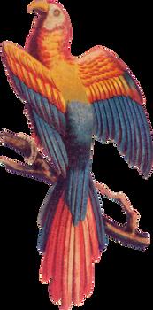 Victorian bird 5_quaddles