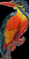 Victorian bird 9_quaddles